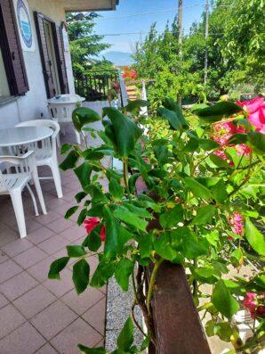 balcone con rose fiorito al B&B