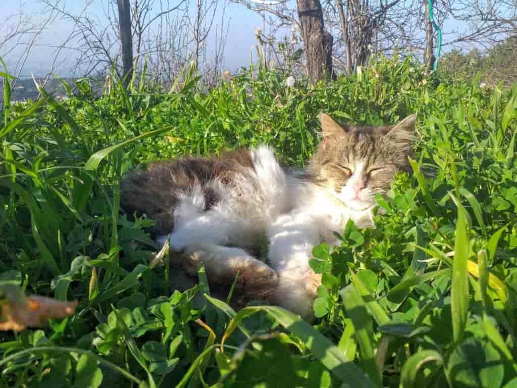Gatto rilassato al B&B di Acri