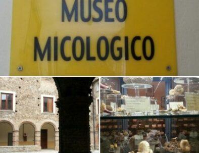 Museo funghi leofilizzati Acri