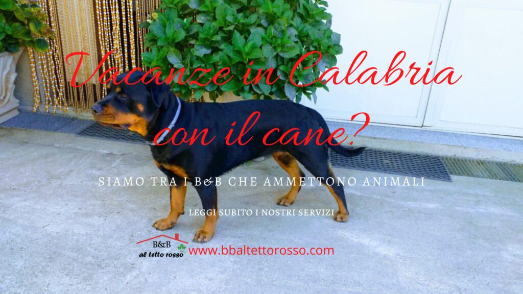 B&B animali ammessi Calabria