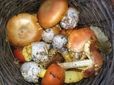 funghi-Acri
