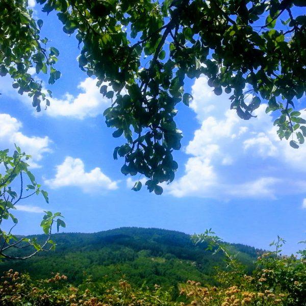Paesaggio con bosco ad Acri